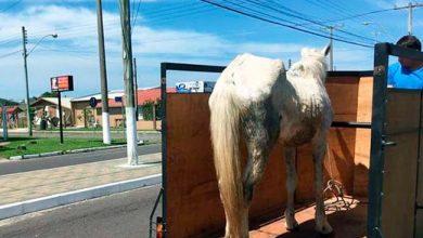 Photo of Cavalo vítima de maus tratos é resgatado em Atlântida Sul