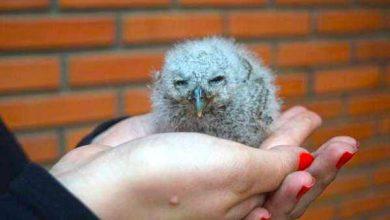 Photo of Filhote de corujinha-do-mato é encontrada no Parcão em Novo Hamburgo