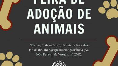 Photo of Sábado terá Feira de Adoção em Sapucaia do Sul