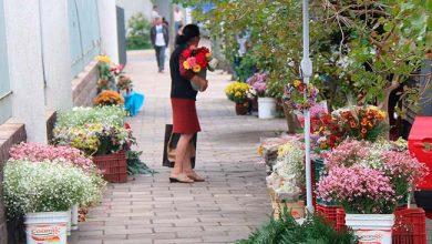 Photo of Feira de Flores de Finados inicia amanhã em Farroupilha
