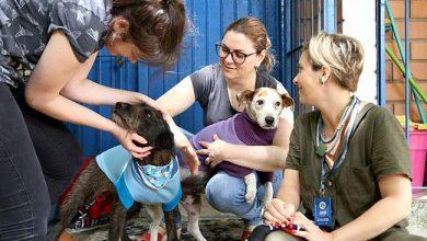 Photo of Voluntárias fazem roupinhas para cães do Canil Municipal de Esteio