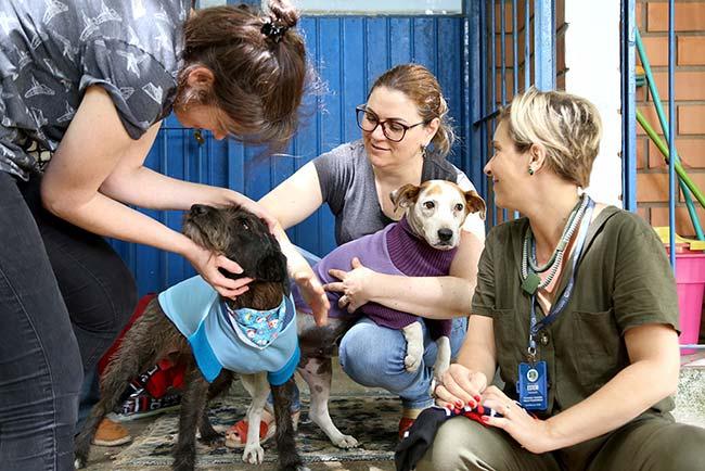 Voluntárias fazem roupinhas para cães do Canil Municipal de Esteio - Revista News