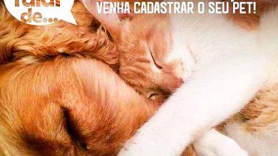 Photo of Santa Maria do Herval oferece castração e microchip gratuitos para cães e gatos