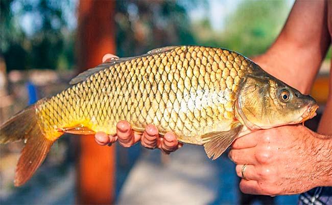 Feira do Peixe Vivo nesta sexta em Caxias do Sul - Revista News