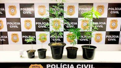 Photo of Polícia apreende maconha na Casa do Estudante da UFRGS