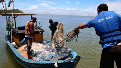 Photo of Peixes de áreas atingidas por óleo podem ser consumidos
