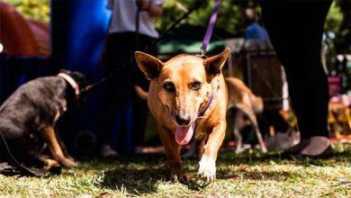 Photo of Semana de Proteção Animal é encerrada na Baronesa, em Pelotas