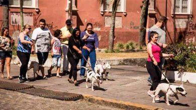 Photo of Cãominhada reúne cães do canil e adotados, em Pelotas