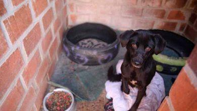 Photo of Campanha em prol dos animais arrecadou tampinhas em Farroupilha