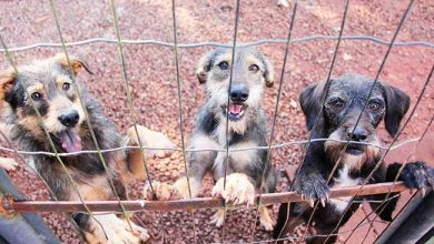 Photo of Castração gratuita de cães e gatos em Lajeado