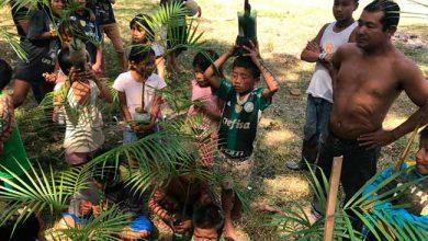 Photo of Plantio de palmeiras garante sustento aos índios em Torres