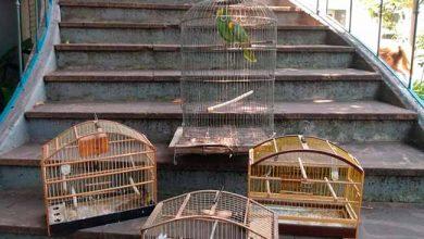 Photo of Aves silvestres são resgatadas no Arroio da Manteiga em São Leopoldo