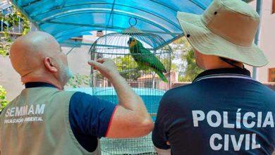 Photo of Ação Integrada resgata aves silvestres em São Leopoldo