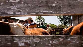 Photo of Oito cavalosganham um novo lar, em Pelotas