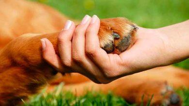 Photo of Imbé agora tem Departamento de Proteção Animal