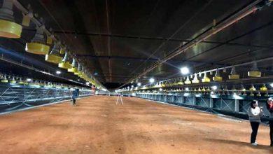 Photo of Flores da Cunha incentiva construção de sete novos aviários