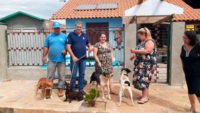 Photo of Vacaria dá continuidade ao Programa de Castração de Cães de Rua