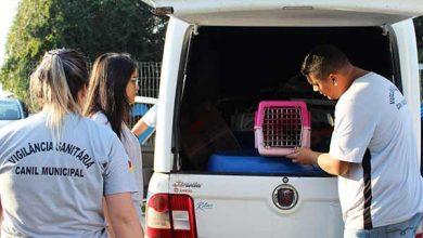 Photo of Tramandaí realizou mais de 1200 castrações gratuitas em cães e gatos