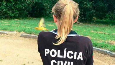 Photo of Polícia combate o tráfico de pássaros silvestres em Camaquã