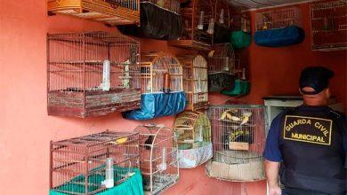 Photo of 35 pássaros são resgatados em três casas no bairro Santo André
