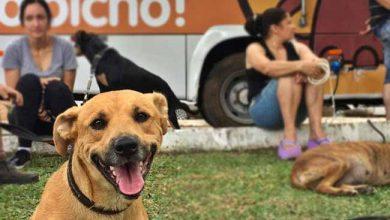 Photo of Prefeitura de Passo Fundo quer contratar clínicas veterinárias