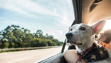 Photo of Tintim, o cão deficiente e abandonado ganha um novo lar