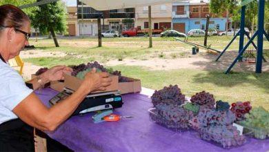 Photo of Veja em quais bairros ocorre a Feira de Uvas de Pelotas