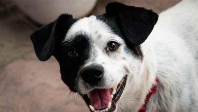 Photo of Capão DogRun promove feira de adoção de cães neste sábado, 15