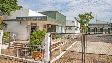 Photo of Centro de Bem-Estar Animal atende milhares de animais em Canoas