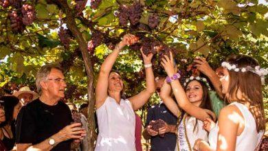 Photo of Público prestigia abertura da Colheita da Uva em Pelotas