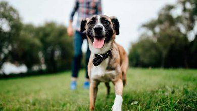 Photo of Balneário Camboriú vai ter palestra gratuita sobre adestramento de cães