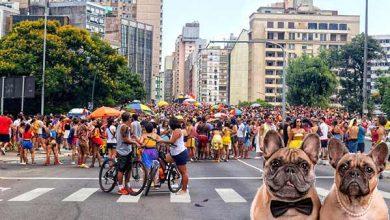 Photo of Pets requerem cuidados especiais nos festejos de Carnaval