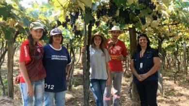 Photo of Família de São Francisco de Paula busca certificação para produção de uva orgânica