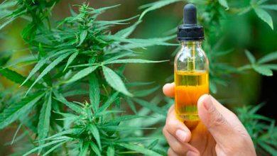 Photo of Resolução sobre cannabis para fins medicinais entra em vigor