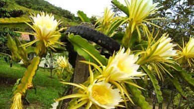 Foto de Tijucas quer se tornar conhecida como Vale das Plantas Bioativas